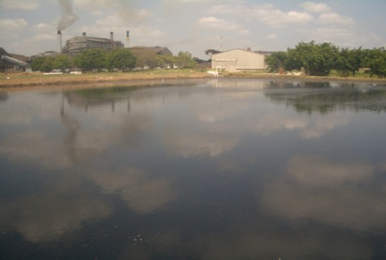 Wastewater treatment Pond after five months of EM application