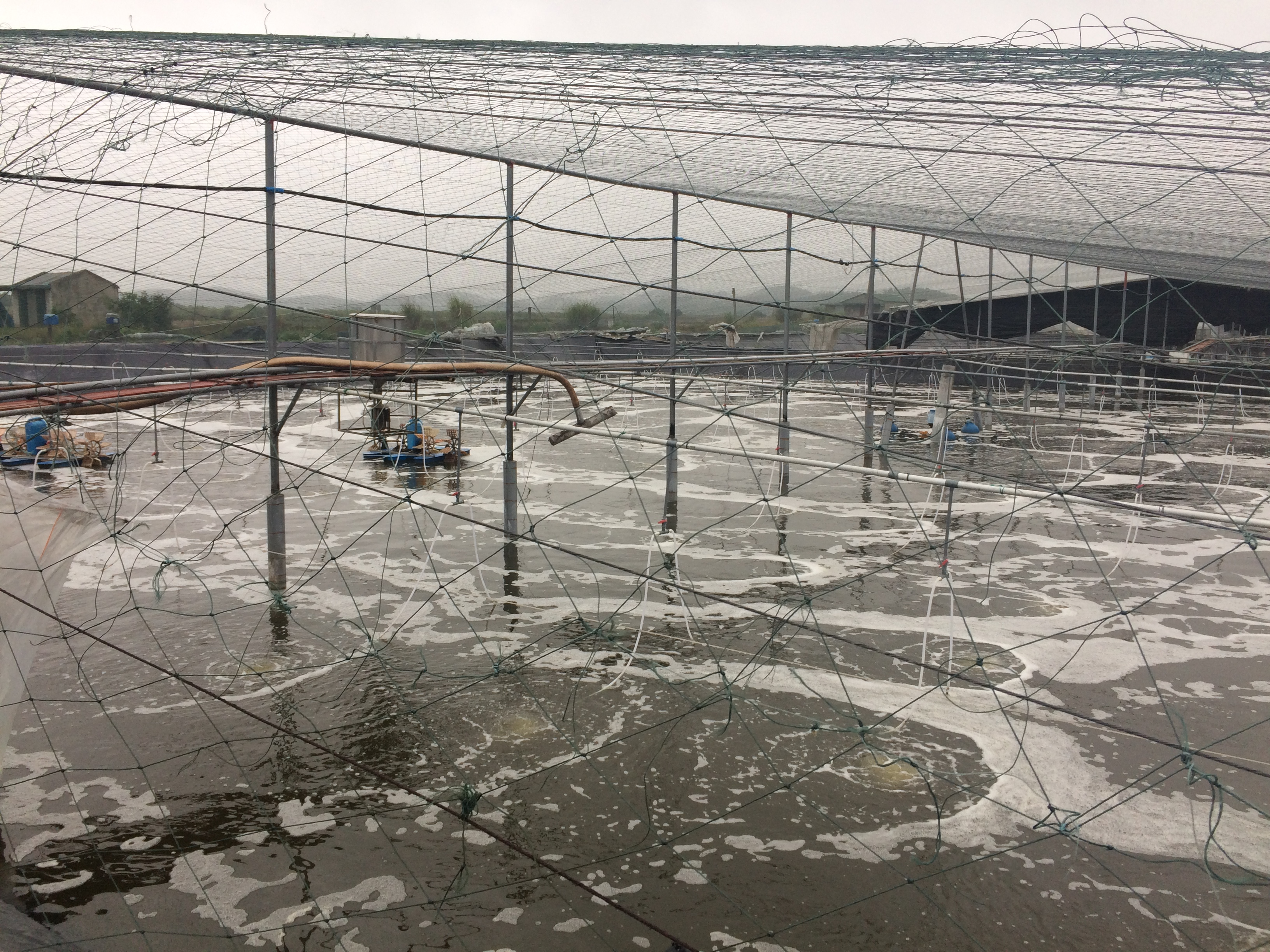 Cultivation ponds totally protected with steel truss and black mesh