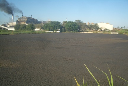 Wastewater treatment Pond before EM