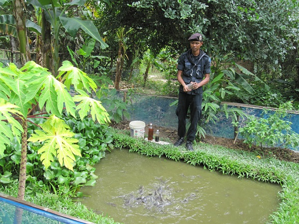 Training for growing catfish with EM, support  farmers for self reliance