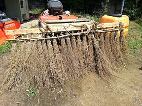 Instead of herbicides, a handmade weeding machine is used to control weeds like monochoria vaginalis.
