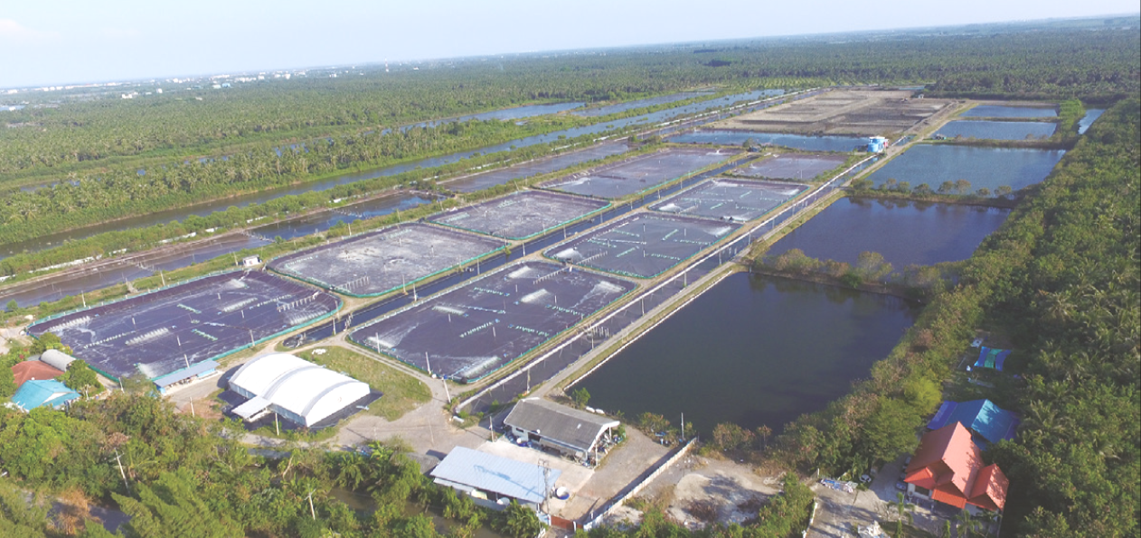100% Water Recycling System in Shrimp Production