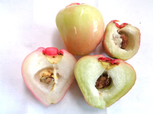 Photo 11: Rembu, rose apple with seeds