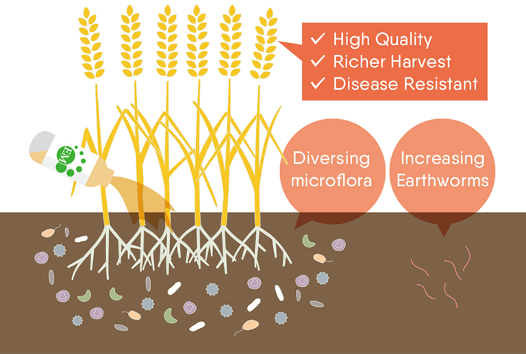 How EM works in soil